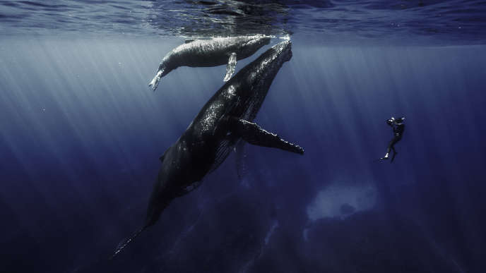 «Quand baleines et tortues nous montrent le chemin», film de Rémy Tézier