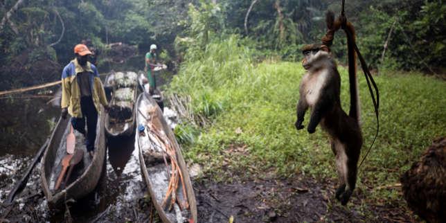 De plus en plus rare, la viande de brousse s'arrache toujours en RDC, malgré les risques de maladie