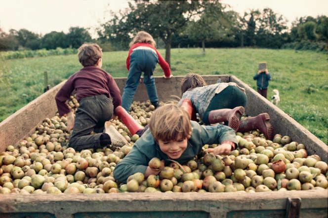 La récolte des pommes à Poilley (année non précisée).