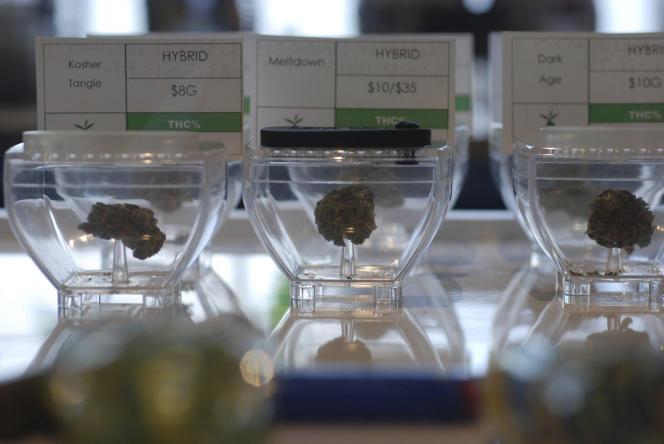 Des fleurs demarijuana à usage médical, à Santa Fe (Nouveau-Mexique), en 2019.