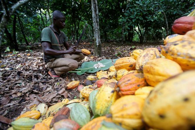 Un planteur de cacao à Toumodi, en Côte d'Ivoire, en octobre 2018.