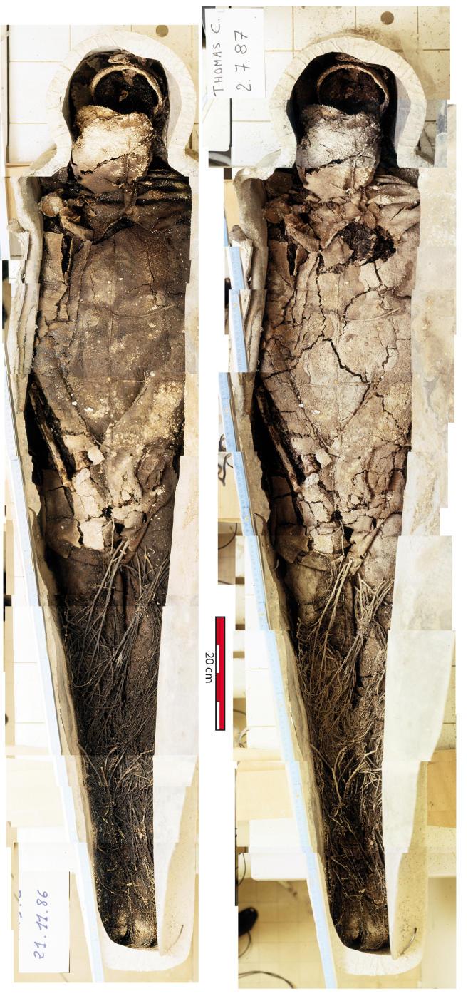 le sarcophage après son ouverture.