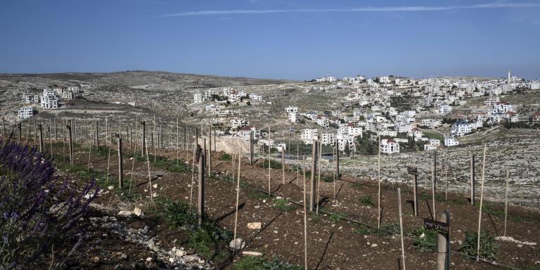 Tanya Habjouqa/NOOR  Occupied West Bank  Sha'ar Binyamin Settlment   Psagot Winery, with Palestinian village in background