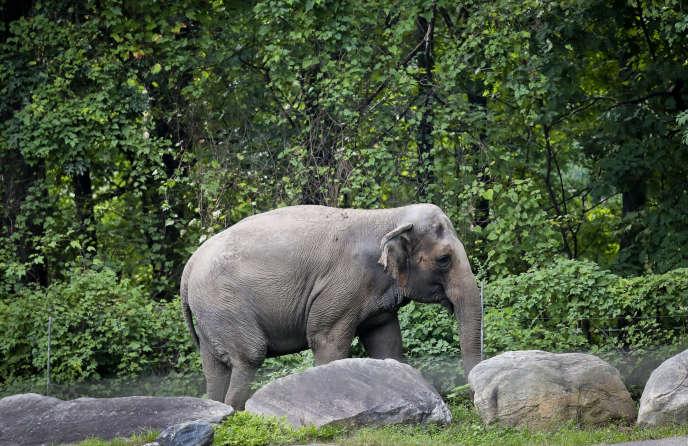 L'éléphant Happy dans son enclos du zoo du Bronx, à New York, en octobre 2018.