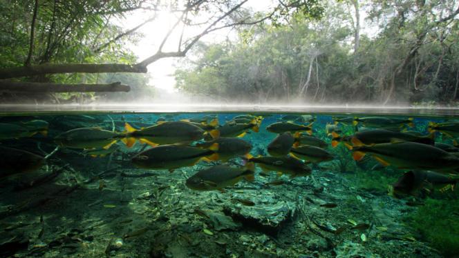 Le Pantanal, en Amérique du Sud, est la plus grande zone humide au monde. Elle est alimentée en eau par les «rivières volantes» d'Amazonie («H2O : l'eau, la vie et nous», de Nicolas Brown et Alex Tate).