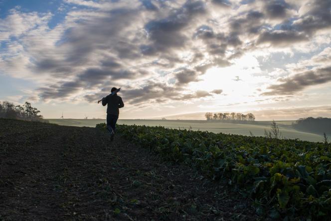 Un champ de betteraves en France.