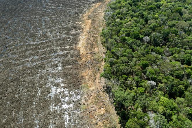 Dans l'Etat brésilien du Mato Grosso, le 7 août 2020.