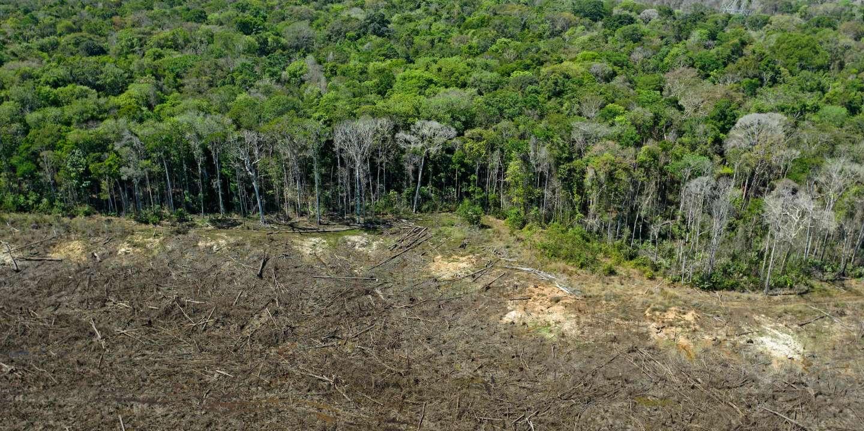 Amazonie : « Le projet du Ferrograo risque de faire basculer la destruction de la forêt vers un niveau irréversible »
