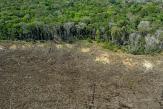 Amazonie: «Le projet du Ferrograo risque de faire basculer la destruction de la forêt vers un niveau irréversible»
