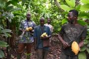 Une plantation de cacaoyers, près de Sinfra, enCôte d'Ivoire, en octobre 2019.