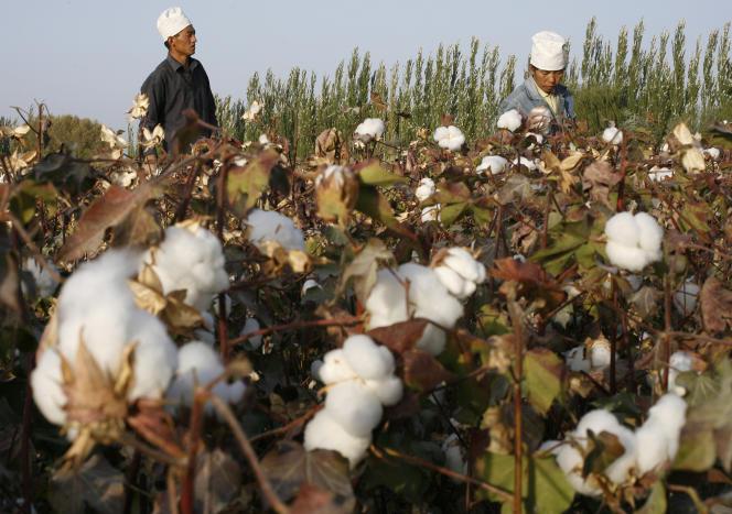 Début décembre, les États-Unis ont annoncé une nouvelle mesure contre les importations de coton en provenance de la région chinoise du Xinjiang.