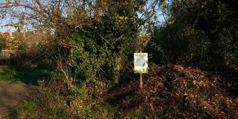 Epinay sur Seine, France, le 26 Novembre 2020 : A l interieur de la reserve écologique, anciennement des jardins des pavillons environnants, puis des jardins ouvriers. La volonté de la Mairie fut de conserver un ilot de fraicheur dans le quartier, d'y preserver la biodiversité et de la rendre accessible aux habitants. L'amenagement de la zone est minimale et des actions de sensibilisations y sont fréquentes.