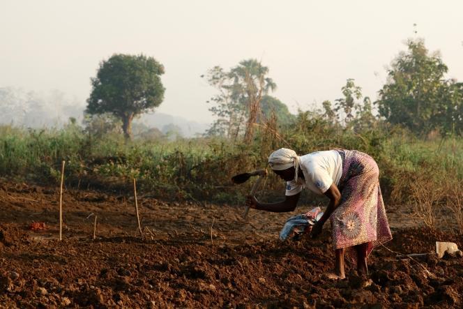 Une femme travaille dans son champ à Bambari, en Centrafrique, le 19novembre 2020.