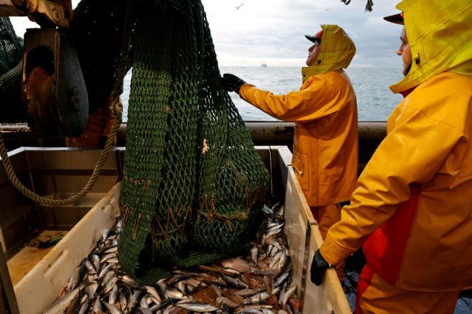 Des pêcheurs vident leur filet, près de Boulogne-sur-Mer (Pas-de-Calais), en mer du Nord, le 7 décembre.