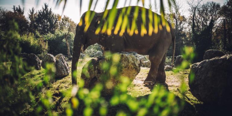 Zoo de Pont Scorff, dans le Morbihan.