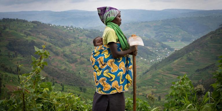 Yvette Baziki, 35 ans, cultive avec son enfant dans le dos sur la parcelle désormais terrassée, le 27 décembre dans le district de Gicumbi dans la province du nord du Rwanda. Yvette a doublé sa production depuis qu'elle cultive en terrasse.  Avant toute la récolte était consommée à la maison, maintenant elle peut aussi en vendre au marché. Elle a été employé par le fond vert rwandais pour construire sa terrasse sur son terrain.