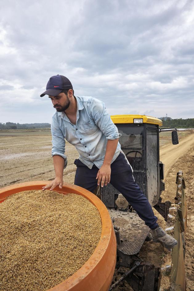 Un paysan du MST surveille la récolte de riz journalière. Aux alentours on aperçoit la rizière, qui fait partie du terrain de la coopérative Nova Santa Rita.