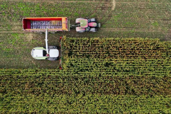 Récolte de maïs, près d'Arzal (Morbihan), le 28 septembre 2020.