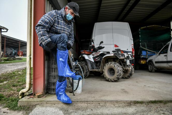 Richard Commarieu, dans sa ferme à Sort-en-Chalosse, chausse des surchaussures jetables, avant d'entrer dans son exploitation touchée par la grippe aviaire. Le 7 janvier 2021.