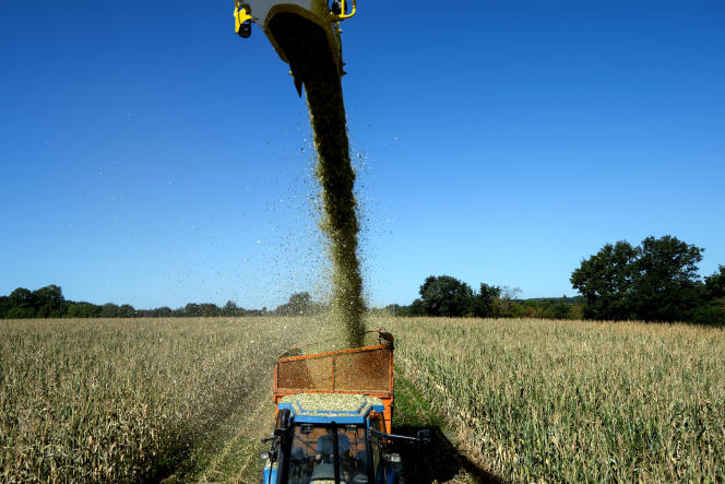 Récolte du maïs, àCourcement (Sarthe) en août 2020.