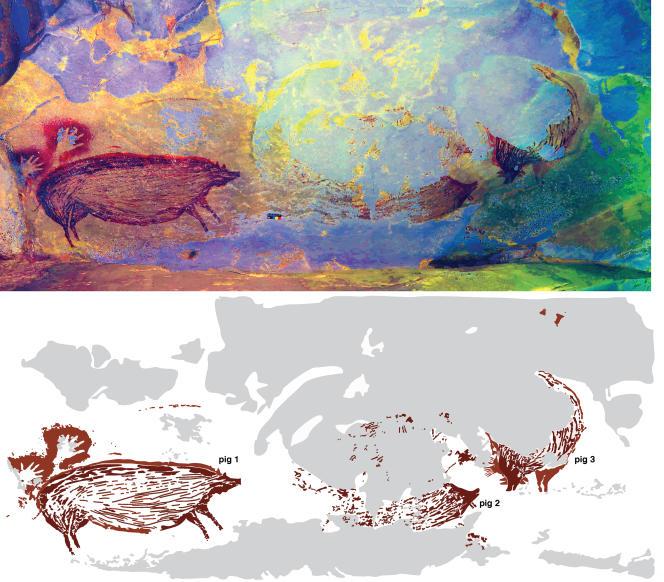 Reproduction en fausses couleurs du panneau présentant plusieurs suidés peints il y a au moins 45 500 ans dans la grotte deLeang Tedongnge (Sulawesi).