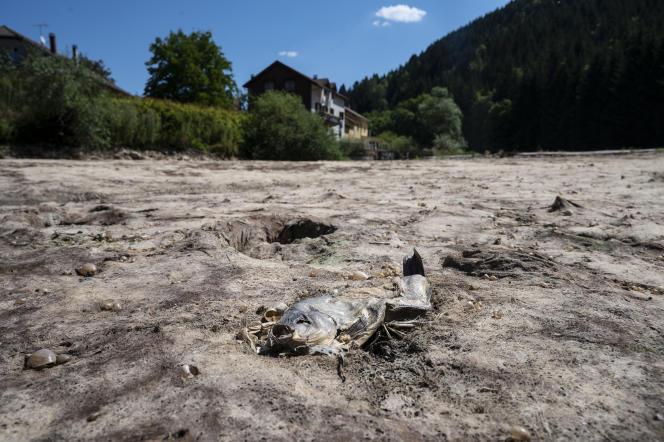 La rivière du Doubs, asséchée lors d'une vague de chaleur le 31 juillet 2020 à Maisons-du-Bois-Lièvremont.
