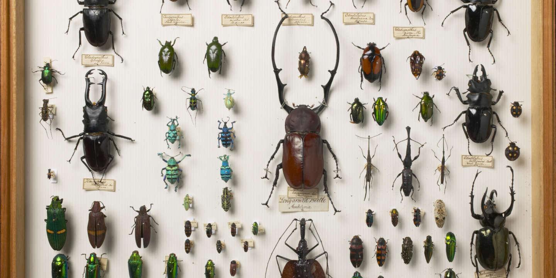 Vive controverse autour du déclin des insectes