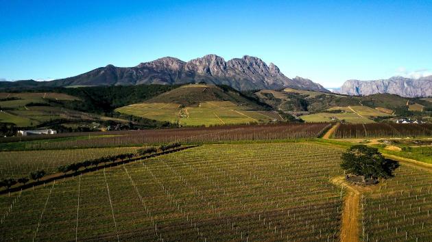 Vignobles de L'Avenir dans la région de Stellenbosch, berceau historique de la culture de la vigne en Afrique du Sud. Le pinotage règne désormais ici en maître.