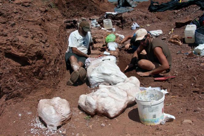 El equipo de investigadores excavó huesos de dinosaurios durante las excavaciones en el valle del río Neuquén en Argentina en enero.