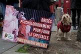 Des groupes de défense des animaux manifestent pour exiger une loi pour les animaux près de l'Assemblée nationale, à Paris, le 26janvier 2021.