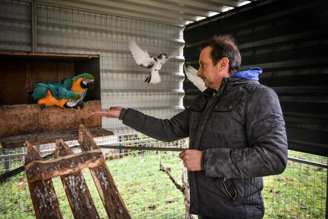 Johnny Kerthe, patron du Johnny Circus, dans la volière où cohabitent perroquets et pigeons, le 21 janvier, en Charente.La famille Kerthe travaille avec quelques espèces issues de la faune sauvage et n'imagine pas l'avenir sans eux, alors que le projet de loi menace cette activité.