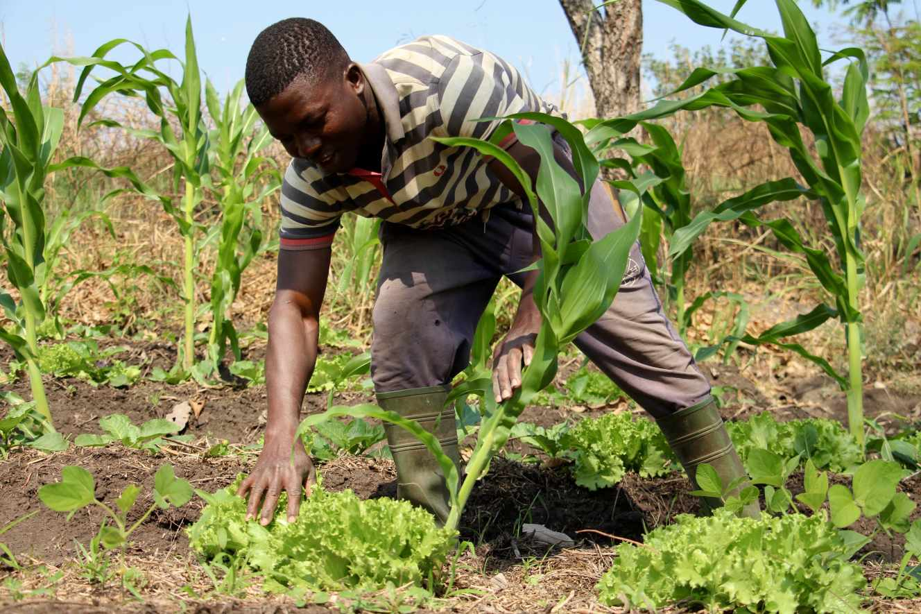 En janvier 2021, à Sotouboua, à une trentaine de kilomètres de la ferme école Albarka, Tou Djetena a lancé sa petite exploitation, dont les rendements et la qualité des légumes enchantent les marchés.