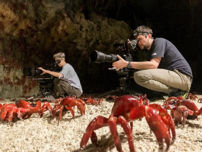 Les crabes rouges de l'île Christmas, en Australie.