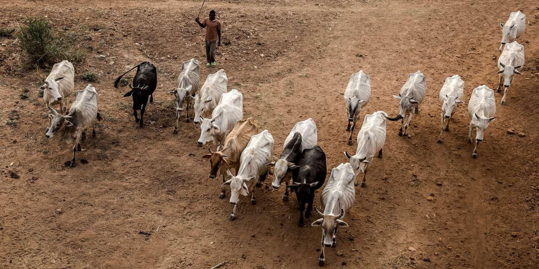 Au Nigeria, 4 000 éleveurs fuient vers le nord après des tensions intercommunautaires