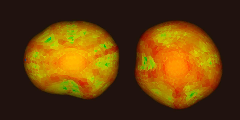 En image, des minicerveaux néandertaliens reconstitués - Le Monde
