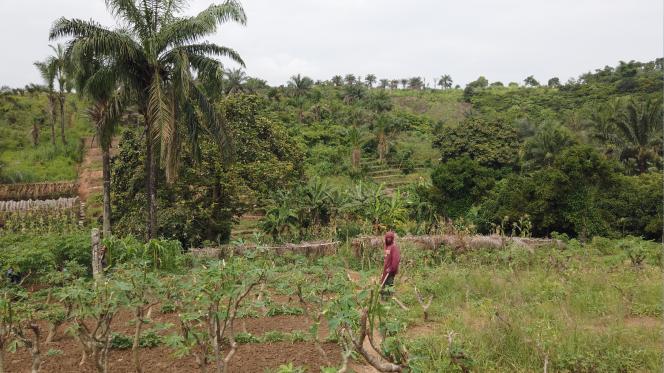 Un travailleur agricole sur le site maraîcher de Kimwenza, à Kinshasa.