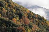 Les forêts, grandes absentes du projet de loi climat et résilience