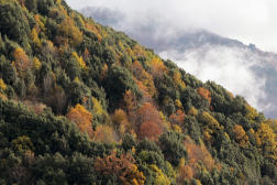 La forêt de Bocognano, en Corse, le 26 novembre 2019.