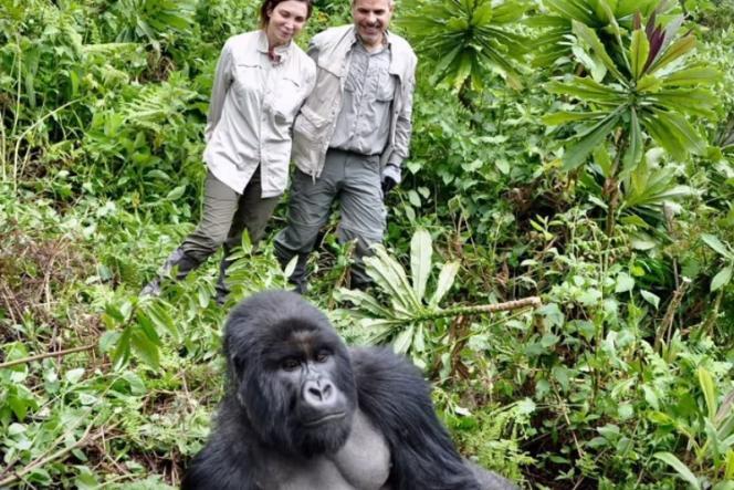 En se photographiant avec des grands singes, les touristes pourraient leur transmettre le Covid-19.