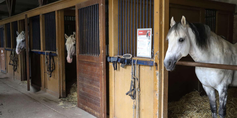 Un palefrenier de Gironde jugé pour des sévices sur des chevaux qui lui étaient confiés