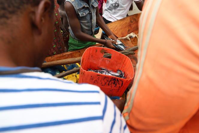Comme souvent depuis quelque temps, la pêche est très moyenne, comme ici à Grand-Béréby, dans l'ouest ivoirien, en mars 2021. La ressource halieutique est en forte baisse.
