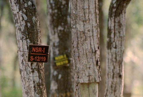 Marayoor_ Details of young sandalwood trees . One of the largest reserve forests of sandalwood trees is in Kerela ..very protected by the govmnt _08/03/21 Détails des jeunes arbres de bois de santal. L'une des plus grandes réserves forestières de santal se trouve à Kerela, très protégée par le gouvernement.