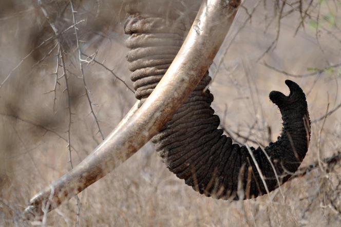Un éléphant au Botswana, en août 2009.