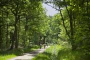 La forêt de Sénart,à cheval sur les départements de Seine-et-Marne et de l'Essonne.