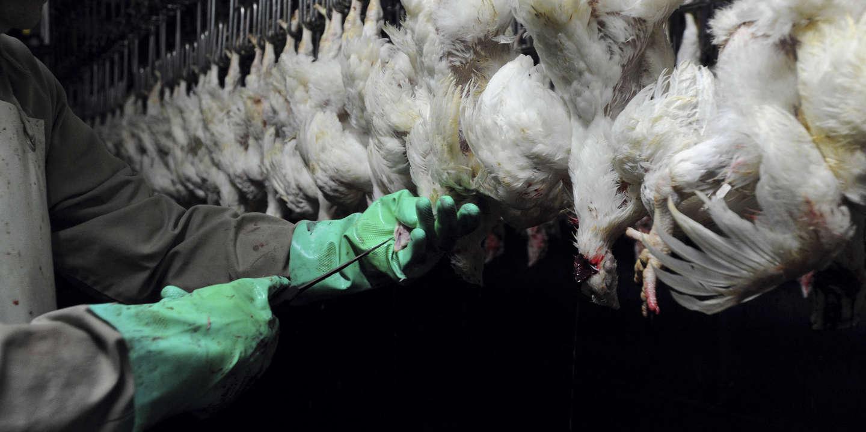 «L'élevage intensif est une impasse environnementale, économique, sanitaire et sociale»