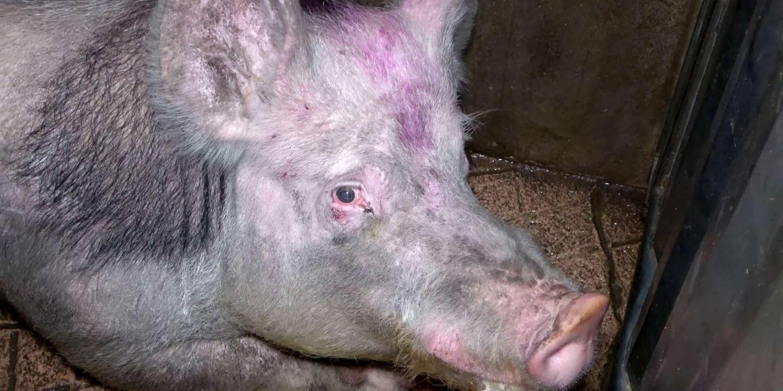 « Les lanceurs d'alerte sur la condition animale agissent dans l'intérêt du public »