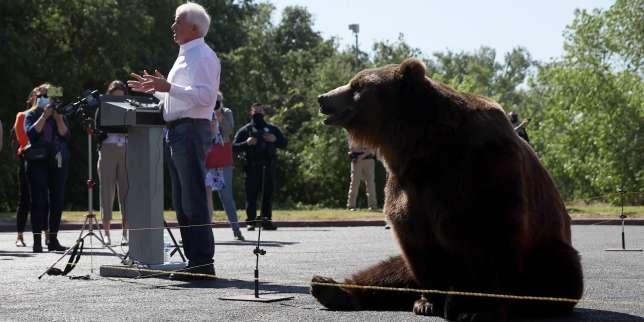 En Californie, John Cox, candidat au poste de gouverneur, fait campagne avec un ours