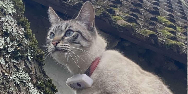 On a testé… « Weenect Cats 2 », le traceur GPS pour chats