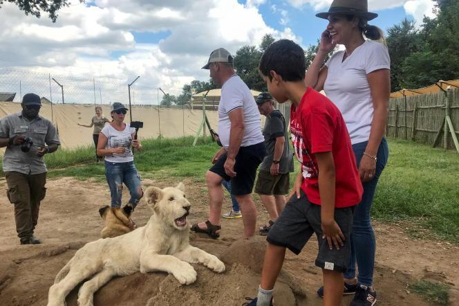 Deux lionceaux entourés de touristes au Lion and Safari Park, près de Johannesburg, en février 2020.
