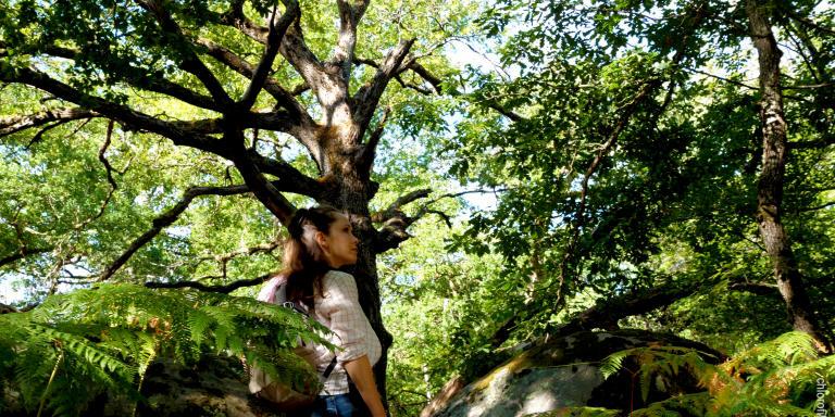 Forêt de Fontainebleau - Faune et Flore